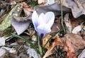 春の息吹(令和2年4月17日)