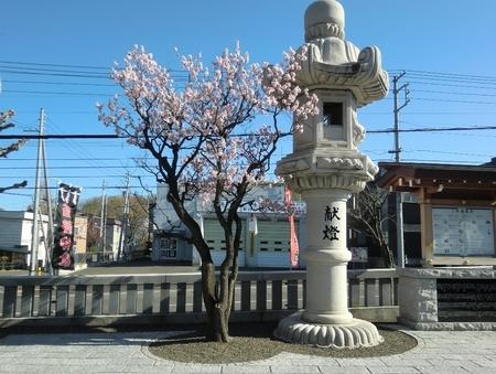 令和2年5月初旬 西野神社の梅