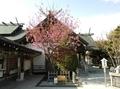 令和2年5月中旬 西野神社境内