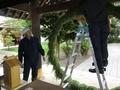 令和2年 西野神社夏越大祓「茅の輪」作成作業
