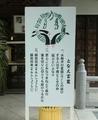 令和2年 西野神社夏越大祓「茅の輪」看板