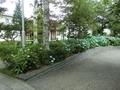 令和2年7月 西野神社境内の紫陽花