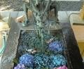 西野神社 花手水(令和2年8月)