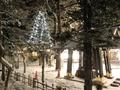 令和3年 西野神社元日 境内ライトアップ