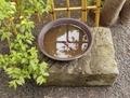 「水みくじ」の水瓶