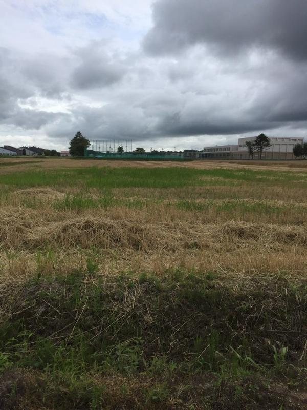 ナマグサクロホ病が出た畑です。収穫途中で判明したため作業を中断。