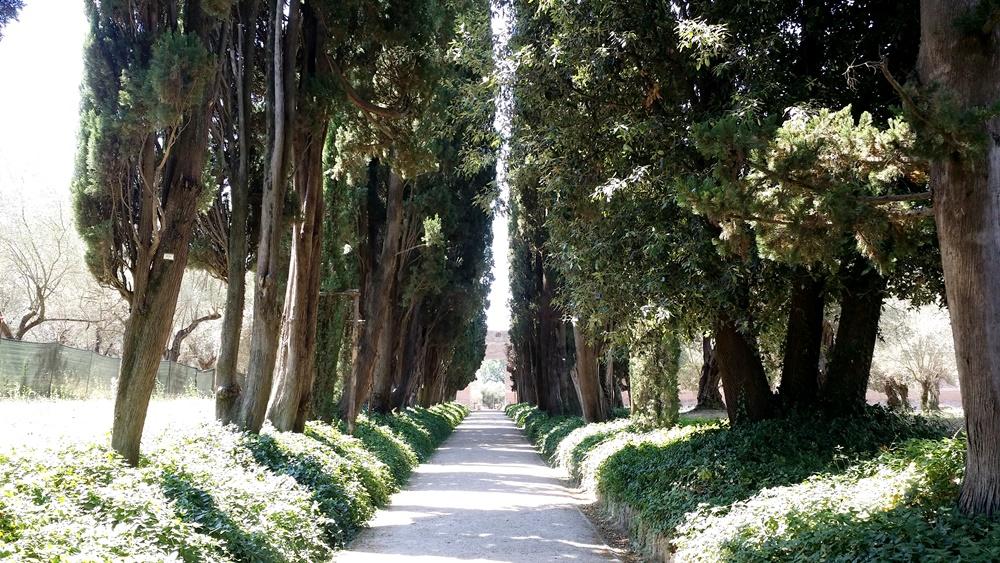 ヴィッラ・アドリアーナの並木道