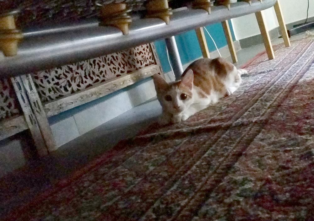 ナポリのBNBの猫ちゃん