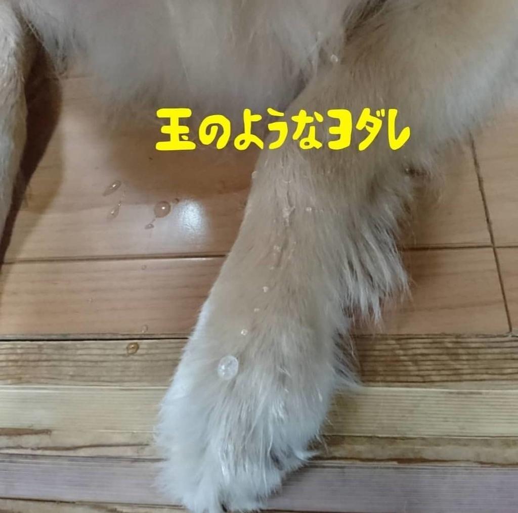 f:id:nitchimosan:20190118093720j:plain