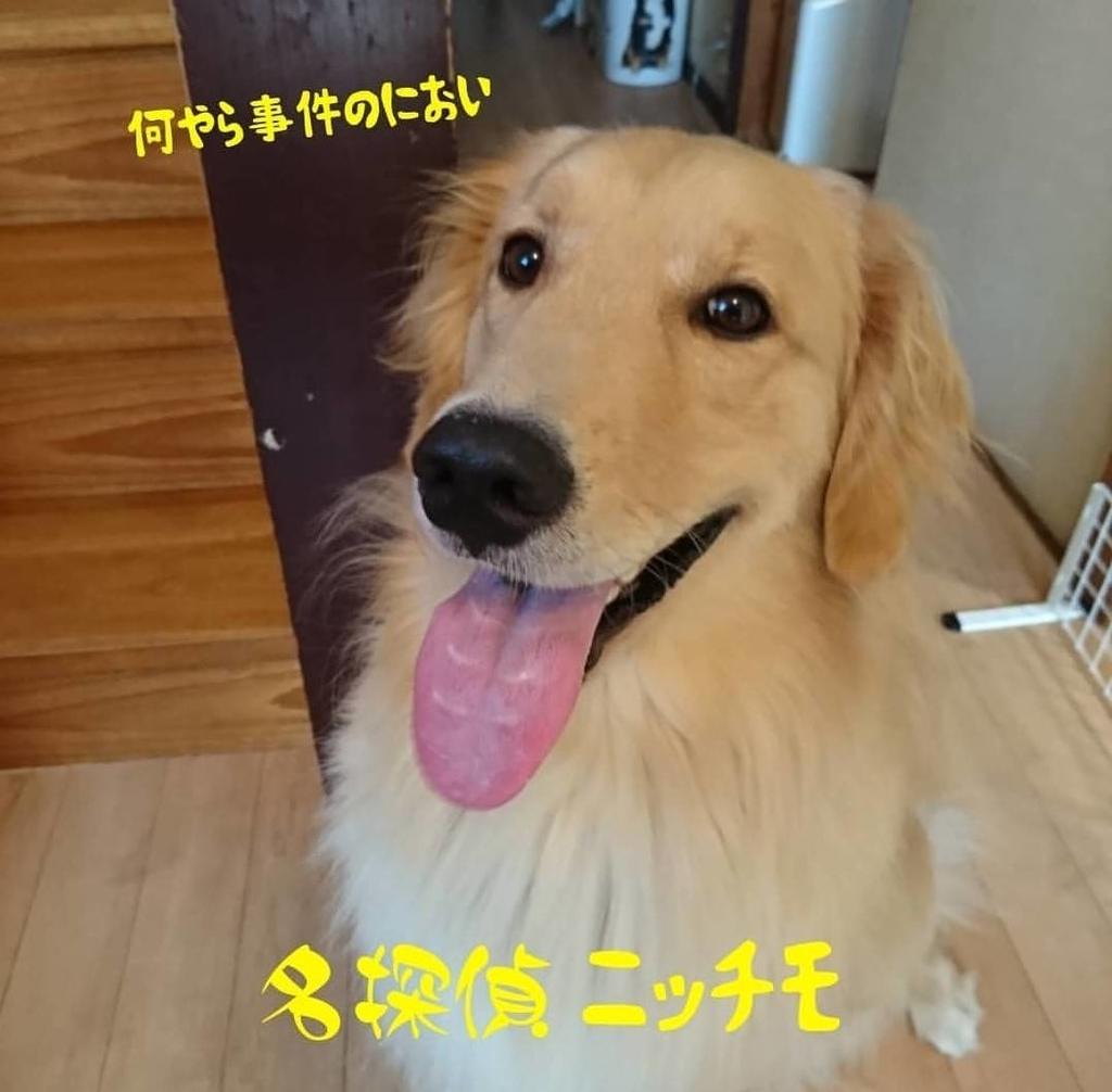 f:id:nitchimosan:20190307222919j:plain