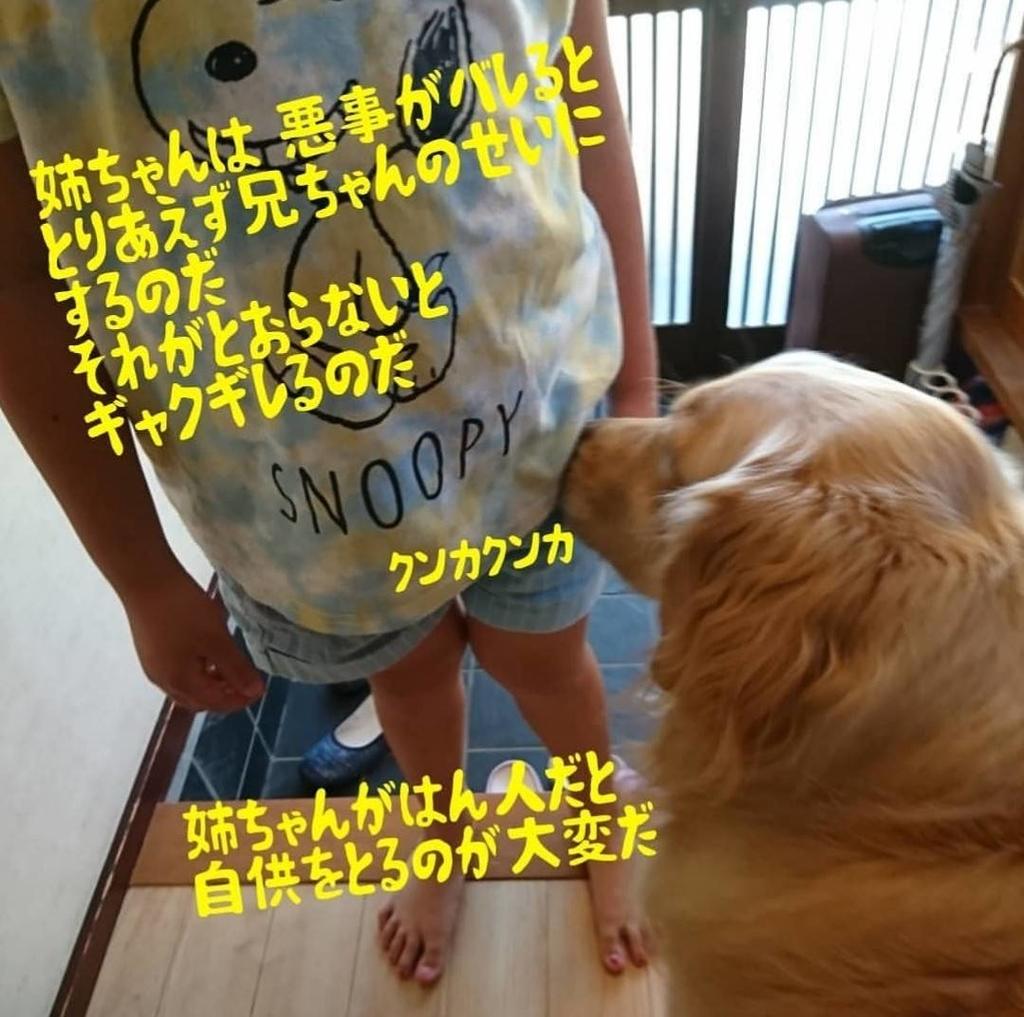 f:id:nitchimosan:20190307223023j:plain