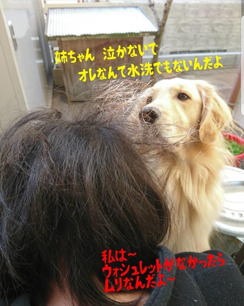 f:id:nitchimosan:20190321225406j:plain