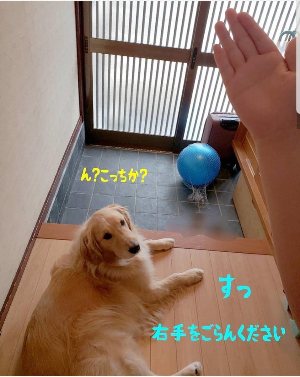f:id:nitchimosan:20190401005854j:plain