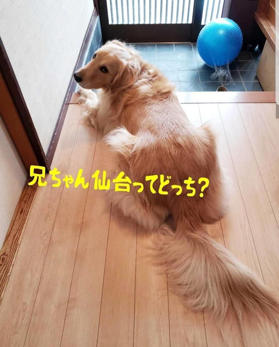 f:id:nitchimosan:20190401005904j:plain