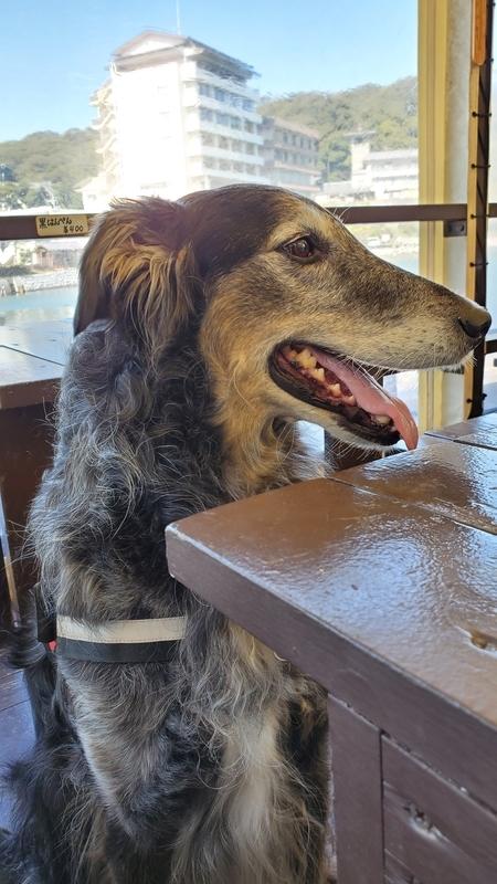 らーめんカフェ ワコー店内の大型犬