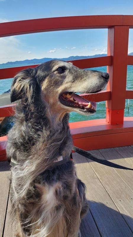 浜名湖と大型犬