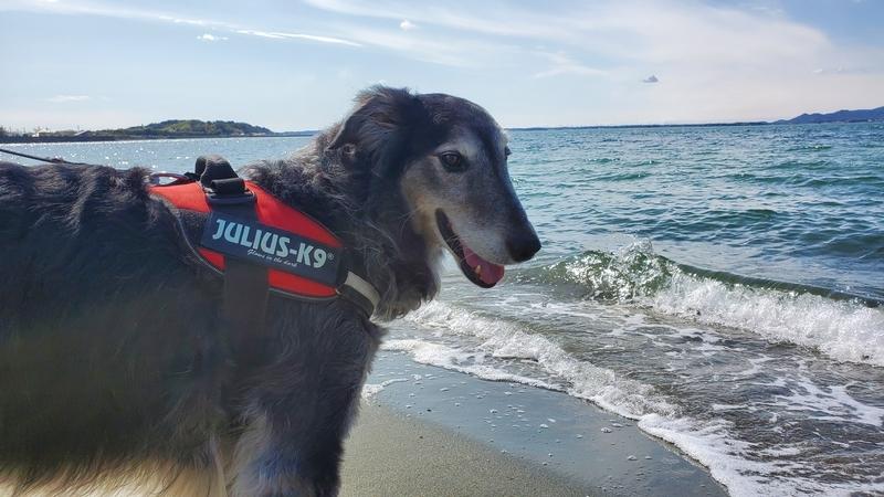 波打ち際の大型犬
