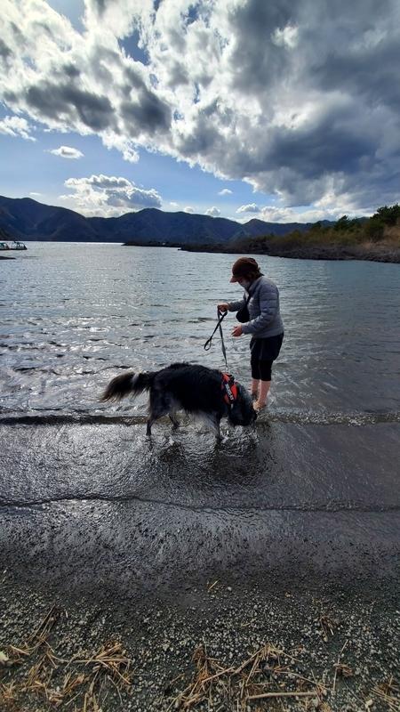 寒いのに本栖湖に入る飼い主と大型犬