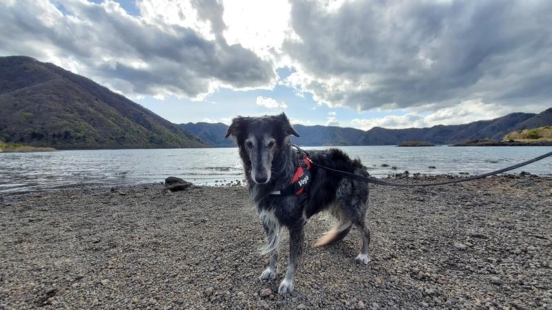 本栖湖をバックに何か言いたげな大型犬