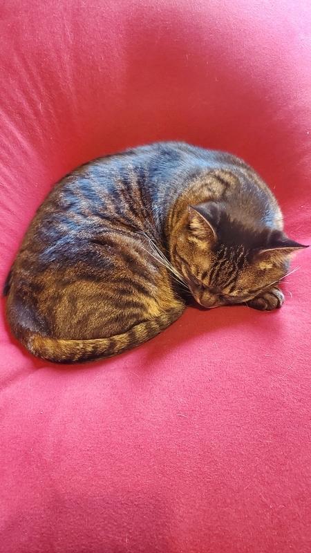 ヨギボーで眠るカワイイ猫