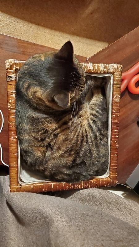 箱にすっぽり収まるカワイイ猫