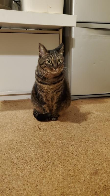 しっぽマフラーをまといお座りするカワイイ猫