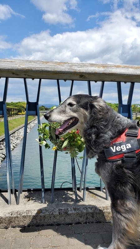 浜名湖ガーデンパークで楽しそうにする大型犬