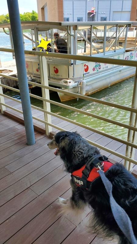 浜名湖ガーデンパークのガーデンクルーズに向かう大型犬