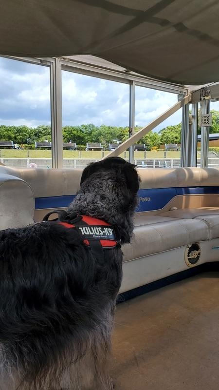 浜名湖ガーデンパークのガーデンクルーズを楽しむ大型犬