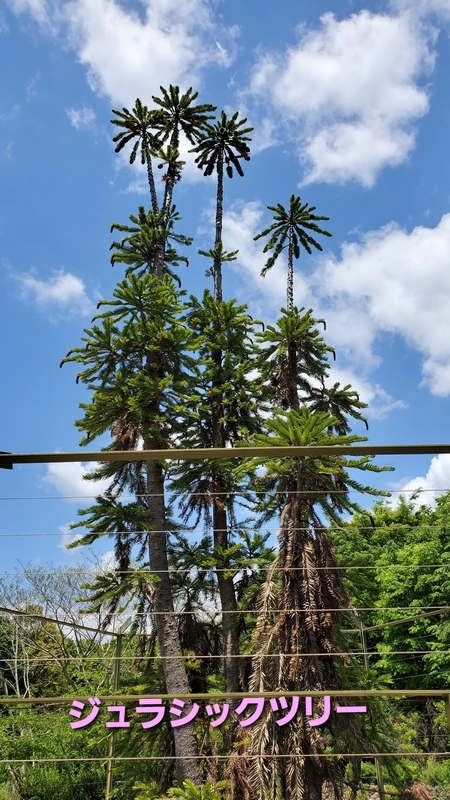 浜名湖ガーデンパークのガジュラシックツリー