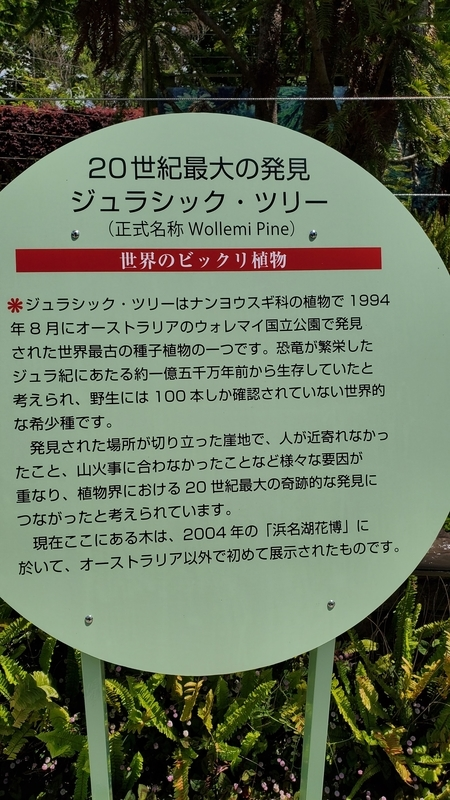 浜名湖ガーデンパークのジュラシックツリー説明看板
