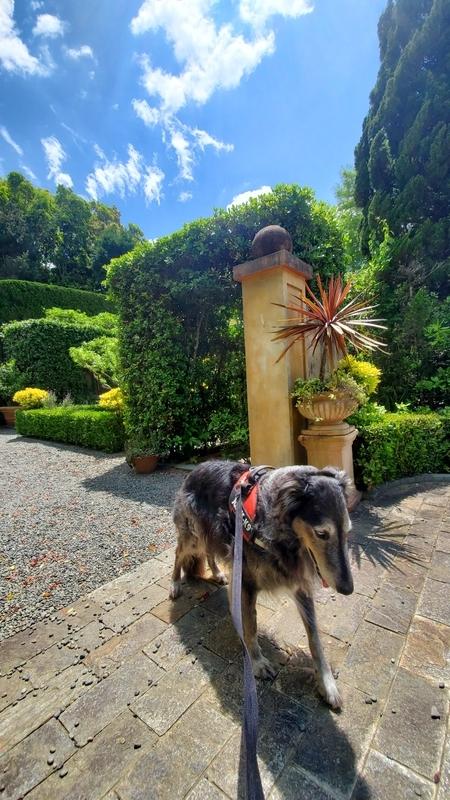 浜名湖ガーデンパークの国際庭園イタリアと大型犬