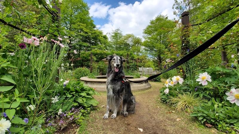 浜名湖ガーデンパークの国際庭園ドイツと大型犬