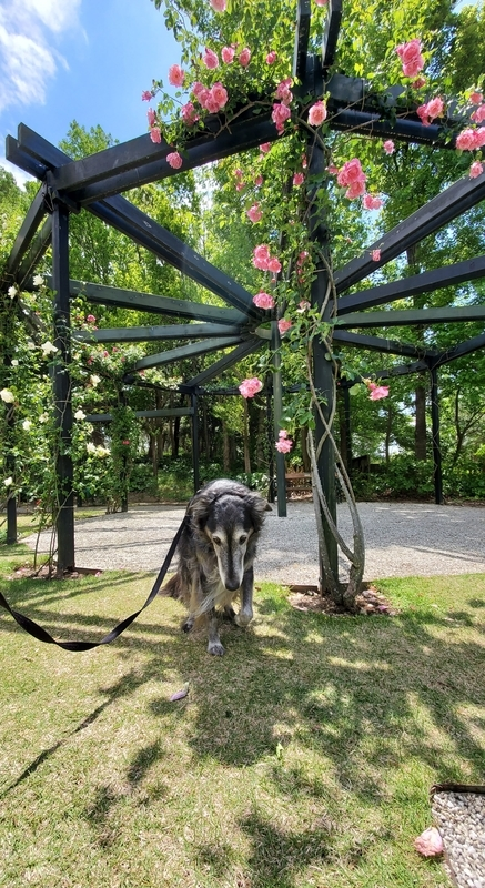 浜名湖ガーデンパークの国際庭園オーストリアと大型犬