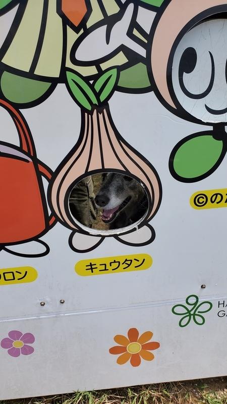 浜名湖ガーデンパークの顔出し看板と大型犬