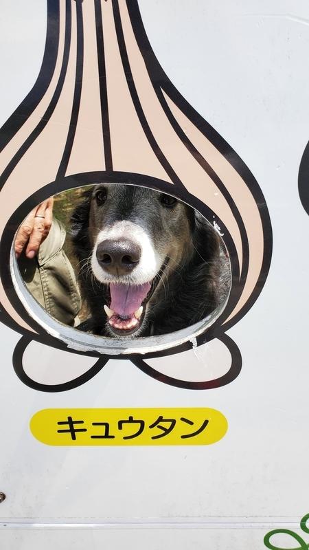 浜名湖ガーデンパークの顔出し看板キュウタンと大型犬