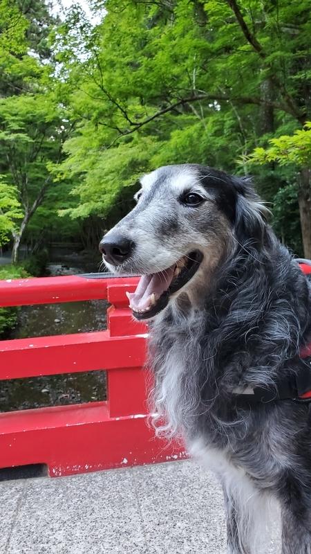 小国神社を流れる宮川と大型犬