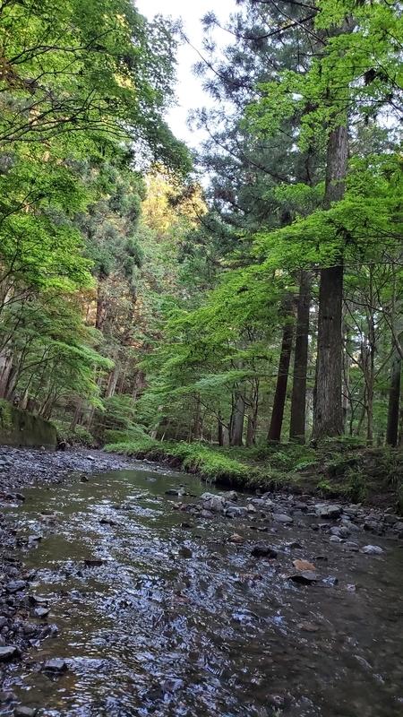 小国神社を流れる宮川と美しい樹々