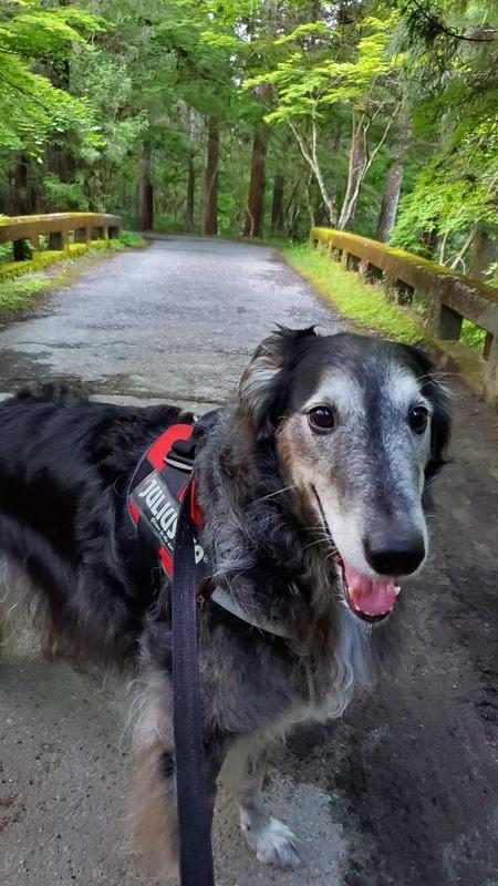 トトロの世界に出てきそうな石の橋と大型犬