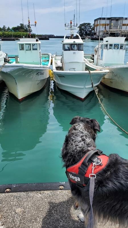 用宗漁港を眺める大型犬
