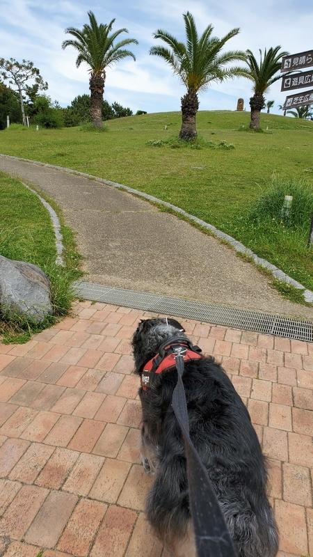 広野海岸公園で散歩する大型犬