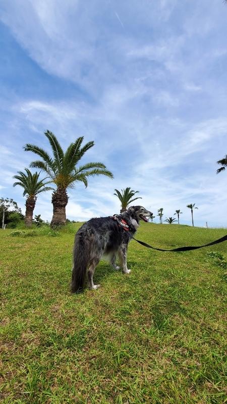 広野海岸公園で楽しそうに散歩する大型犬