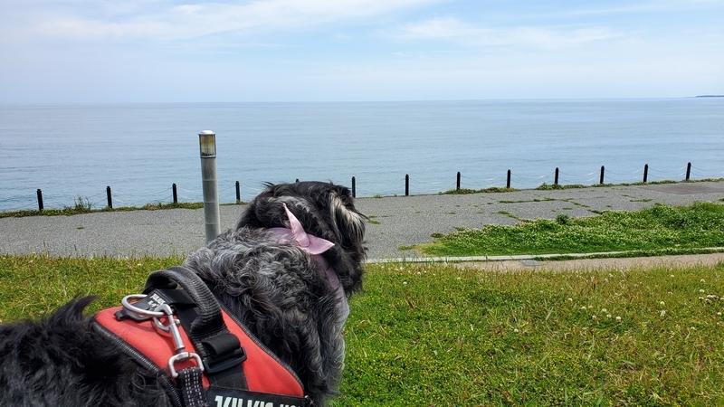広野海岸公園で太平洋を眺める大型犬