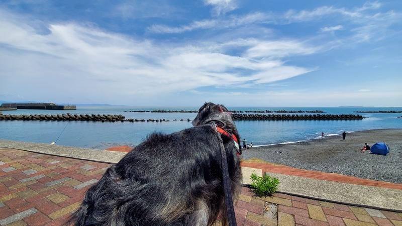 用宗海岸を眺める大型犬