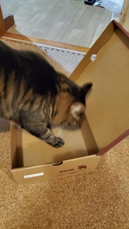 箱が好きなかわいいキジトラ猫