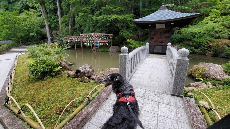 法多山の風鈴まつりを楽しむ大型犬
