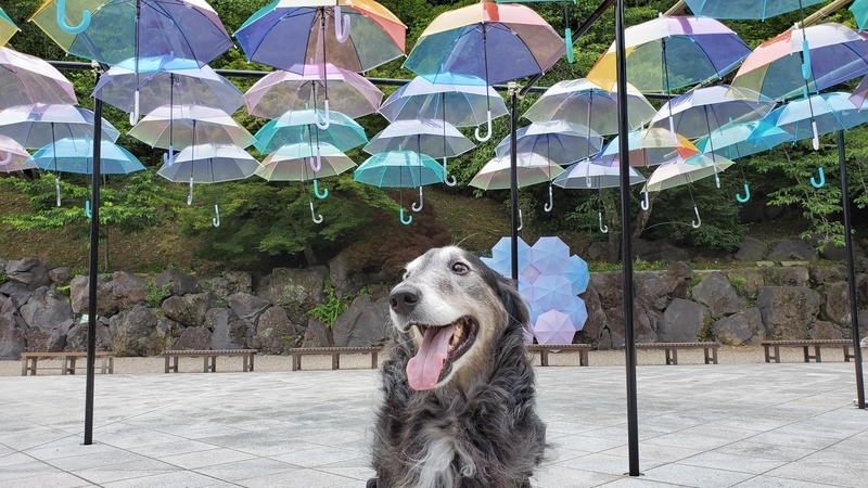 アンブレラスカイをバックに笑顔の大型犬