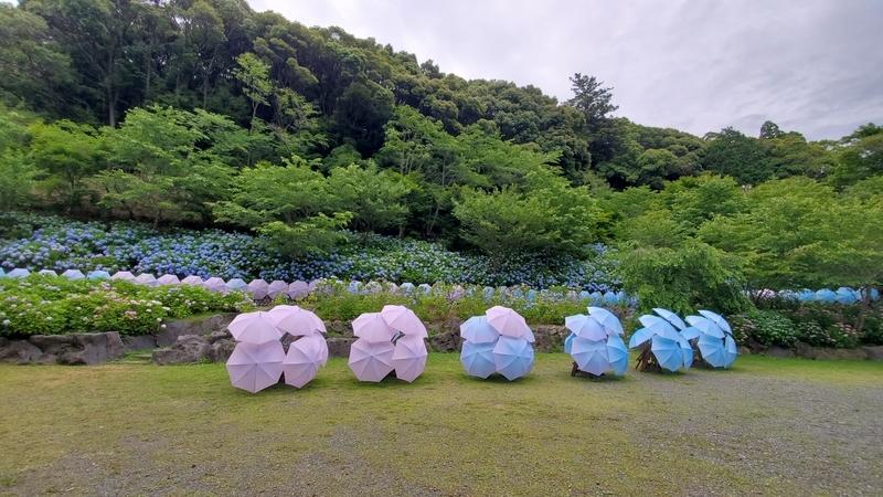 法多山の紫陽花と紫陽花を模した傘
