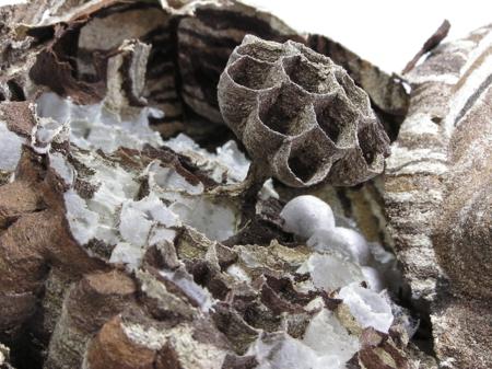 スズメバチの巣2