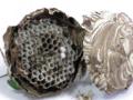 スズメバチの巣1
